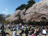 E no parque em Shinjuku, o piquenique é na grama mesmo...