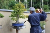 Bonsai no parque Showa Kinen