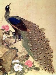peacock-okyo